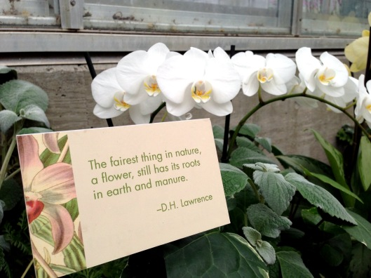 Orchid quote